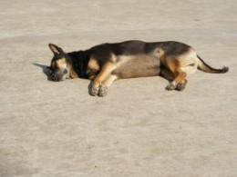 Procrastinating dog