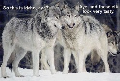 About Them Thair Wolves...