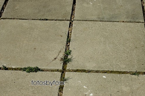 concrete pavement with weeds and moss