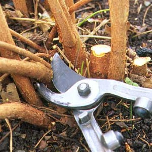 pruning back shrubs, photo courtesy thisoldhouse