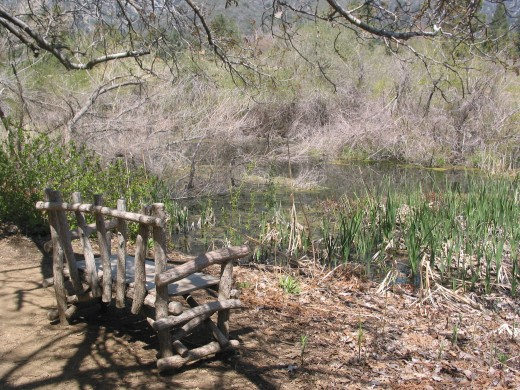 Poet's Bench--a place by the pond for writers. One of my favorite photos/taken April 2010.