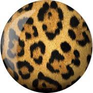 Brunswick Leopard