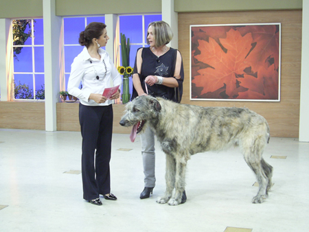 Irish Wolfhound 12