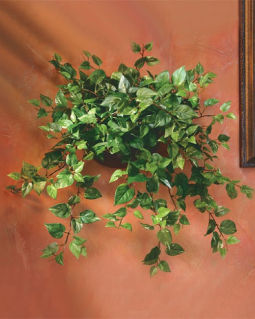 Silk plants come in many sizes, and silk hanging plants don't shed leaves!