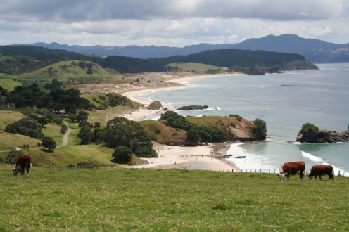 Part of New Zealands Coastline