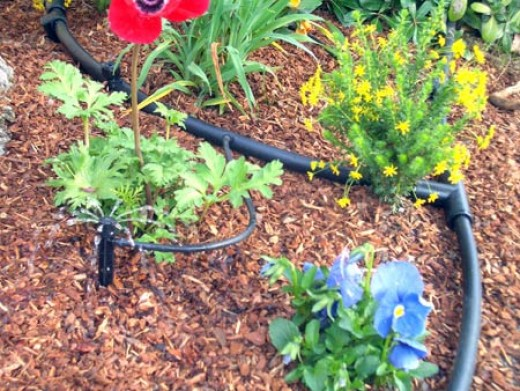 Drip irrigation is essential to cut down on water waste.