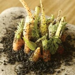 Noma's Baby Carrots with Edible Soil   Courtesy of World's 50 Best