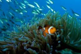 Rich marine life at Perhentian