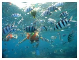 Amazed by the density of fishes at Perhentian