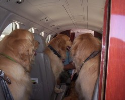 Tips for Traveling with Your Pet by the Air.