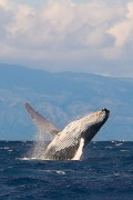 Endangered Species - Endangered Marine Animal Species Of The World