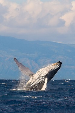 Endangered Species - Endangered Marine Animal Species Of The World