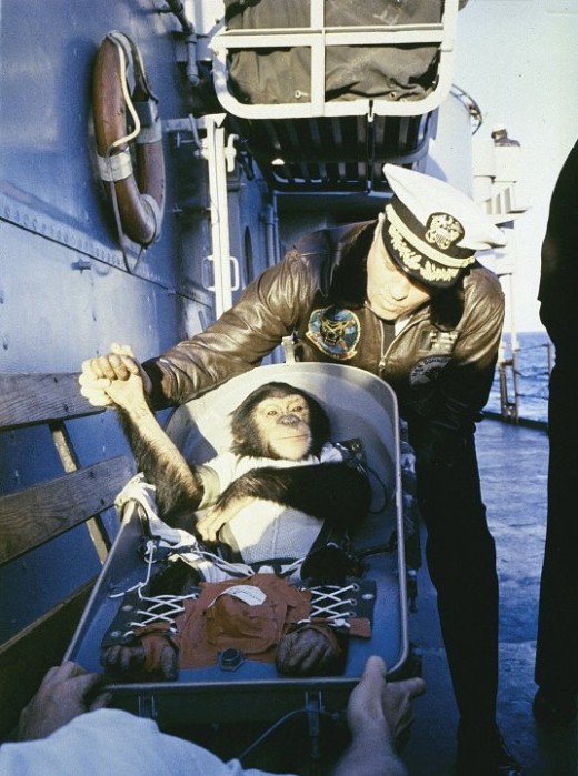 A chimpanzee named Ham tested the Mercury spacecraft before Shepard's flight. Photo courtesy of NASA.