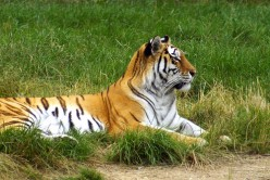 5 Endangered Animals In The World