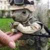 American Veteran profile image
