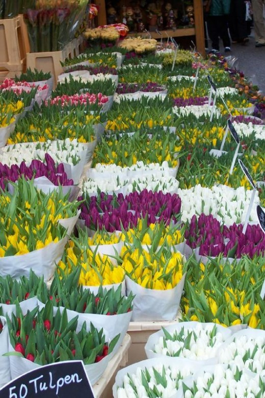 Tulips at the Bloemenmarkt in Amsterdam