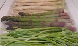 Various Cultivars, Asparagus