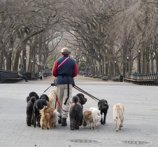 """Drool around with your dogs to give them the exercise they need and a chance to pee or poo. Shun away with places that mete out fines once your dog performs the """"call of nature""""."""
