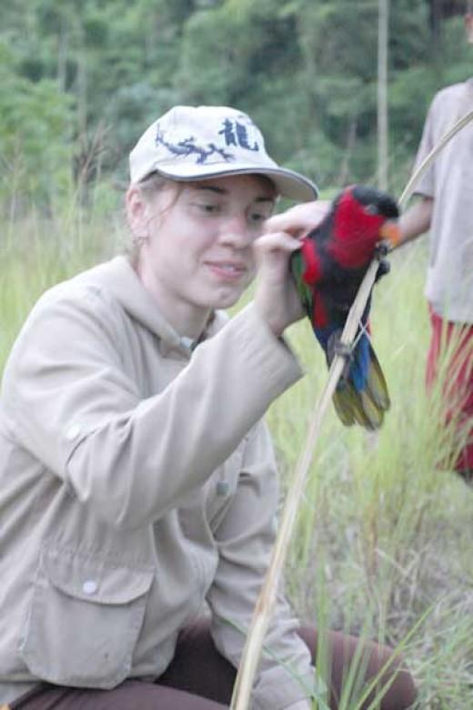 lorius bird in Manokwari of West Papua
