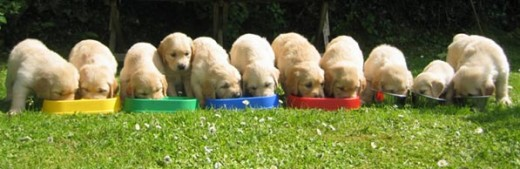 Puppies in Training