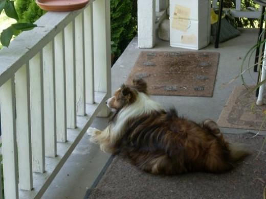 My dog Chloe in her zen in Seattle too.