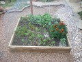 Tips for Success with Square Foot Gardening
