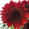 Ruth Benjamin profile image