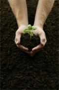 Plant Power!