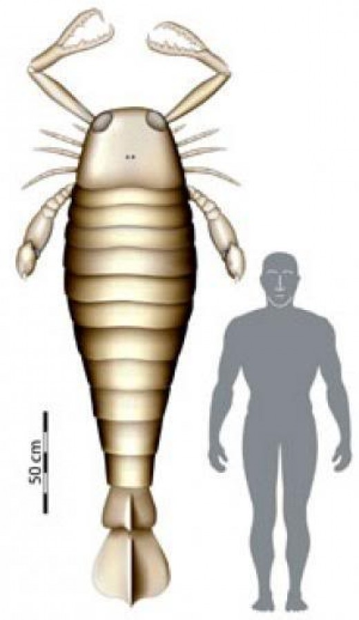 The ancient sea scorpion is the ancestor to the modern one.