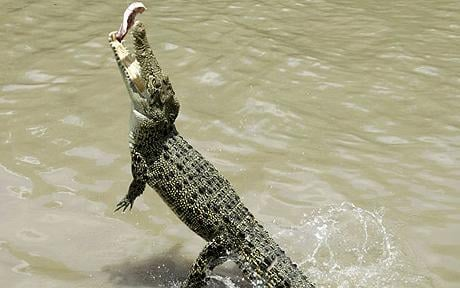 The modern sea crocodile lives in the exact same environment as the ancient form hundreds of millions of years ago.