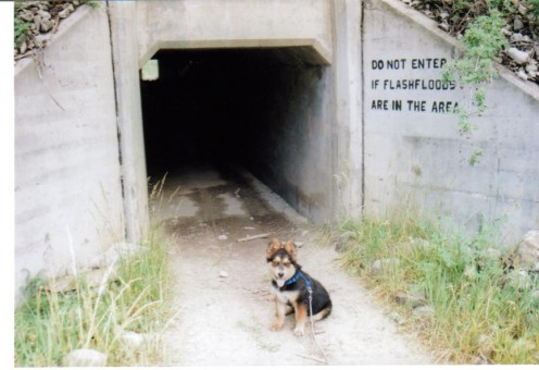 Riley at 6 months old at the entrance to a tunnel used for hiking under a road in New Mexico.