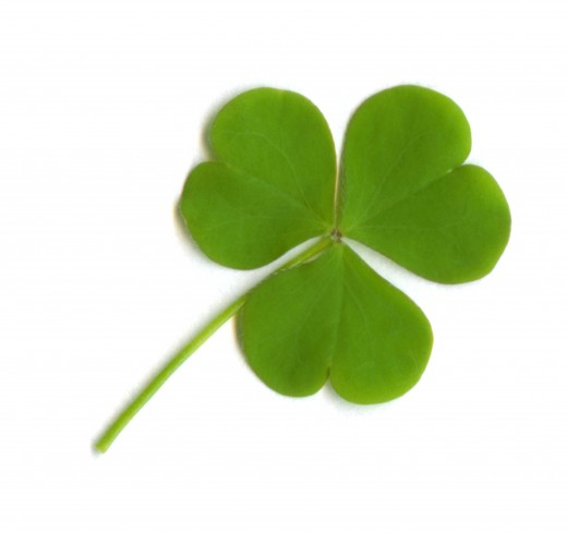 three leaf clover .. a shamrock