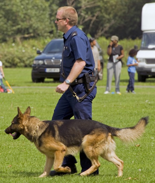 Dog Handler with German Shepard Dog