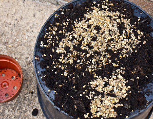 Compost, a mixture of John Innes potting compost, and natural aquarium gravel, 7:3
