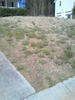 Early April and fired Lawn Service .....Help!