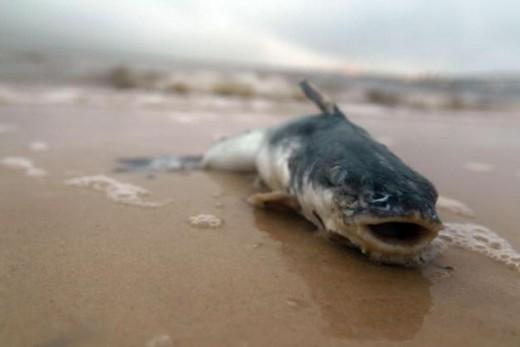 BP Oil Spill Victim