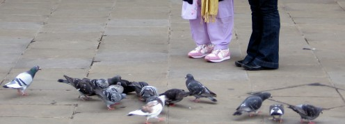 Pigeons busy with their own activites. No protest photograph !
