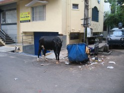 There are Corporators duly elected from the slums of Bangalore so they need to keep all filth and Garbage every where to make the city SLUM FRIENDLY those who live around this filth cannot do anything but close their nose with hand kerchief and walk