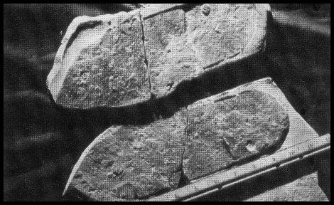 Utah Sandal Fossil