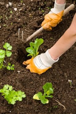 Kill Weeds With Lasagna Gardening