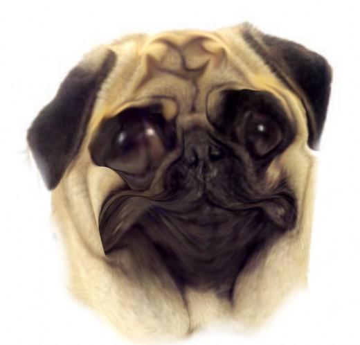 Pug ugly.