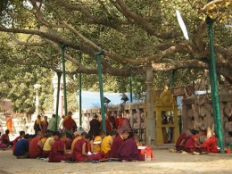 Monks chanting under a bodhi tree or sacred fig.