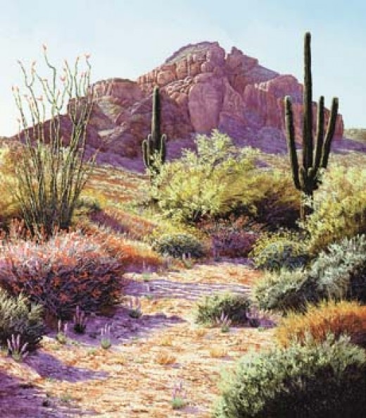 The natural beauty of the Arizona desert
