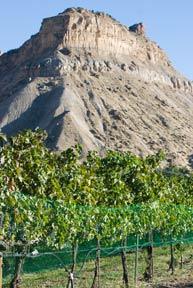 Western Colorado offers wine-tasting tours at wonderful vineyards, year-round