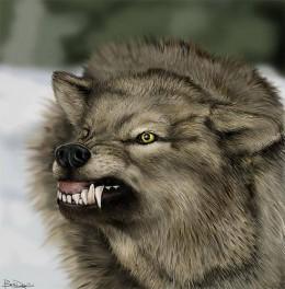 الذئب البري 316913_f260.jpg