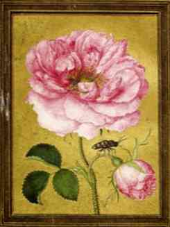 Jacques Le Moyne de Morgues, Damask Rose from a manuscript of 16 miniatures of flowers and insects, probably 1570s Dumbarton Oaks, Washington, Trustees for Harvard University