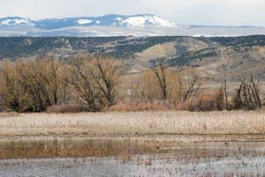 Fruit Grower's Reservoir Bird Sanctuary near Eckert, Colorado. Sandhill Cranes stop here during their migrations.