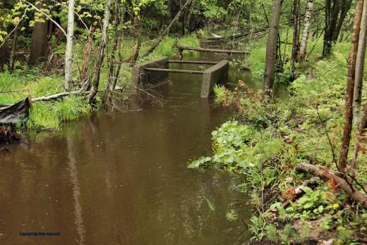 The creek runs muddy and high.