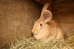 Indoor rabbit cages - so you can have your rabbit in the safety of inside.