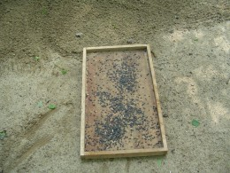Sunflower seeds are added - these appeal to squirrels and birds